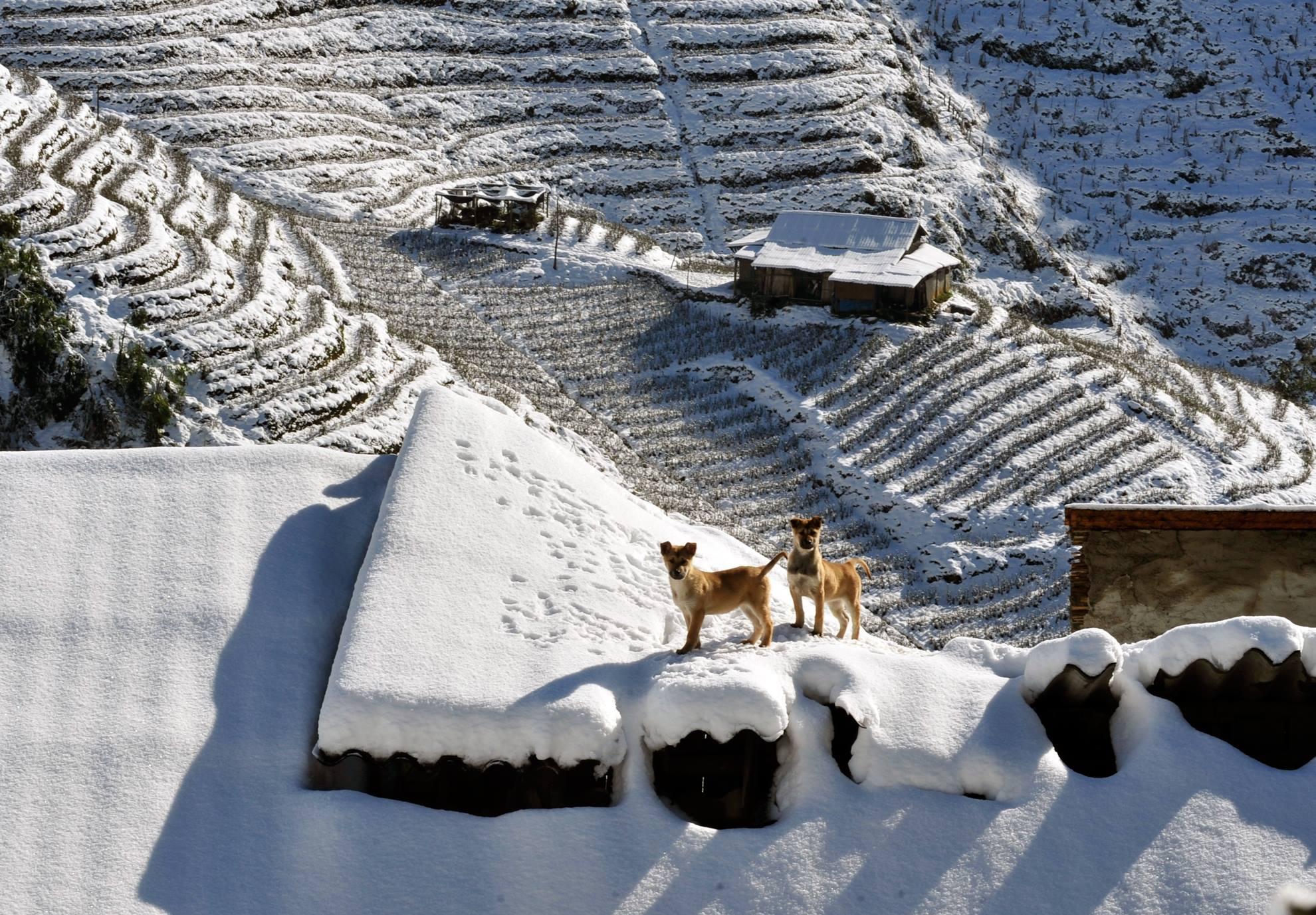 Tuyết-Sapa-dường-như-đã-phủ-kín-khắp-mọi-nơi
